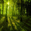Forest in the morning light - Stock Photo
