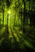 Forest in the morning light — Stock Photo