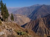 Canyon Colca — Stock Photo