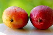 两个芒果水果. — 图库照片