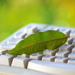 Green leaf on keyboard. — Stock Photo #4273640