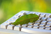 Green leaf on keyboard. — Stock Photo