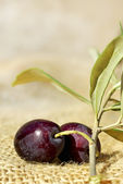 Close-up of mature olives. — Stock Photo