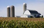 Fazenda e campo de milho — Fotografia Stock