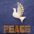 White dove with the word peace — Stock Photo