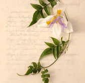 Lily and vine on old-fashioned script — Stockfoto