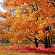 Fall in a park — Stock Photo #4108502
