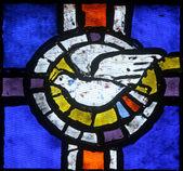 Holy Spirit Bird — Stock Photo