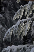 Winter landscape trees under snow — Stock Photo