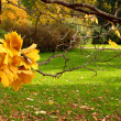 Autumn in city park - Photo