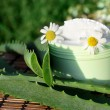 Cream with aloe vera and daisies — Stock Photo