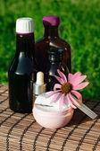 Echinacea alternative medicine — Stock Photo