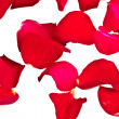 Rose Petals, completely isolated on white background — Stock Photo #3943511