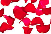 Rose Petals, completely isolated on white background — Stock Photo
