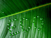 Eco — Stock Photo