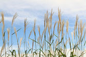 Grass against sky. — Stock Photo