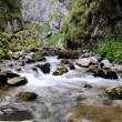 Alpine stream — Stock Photo