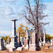 Old graveyard with spooky old dead trees — Stock Photo