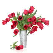 Red Tulip Beauty — Stock Photo