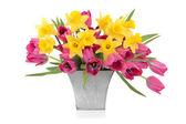 Tulip and Daffodil Beauty — Stock Photo