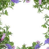 Herb Flower Border — Stock Photo