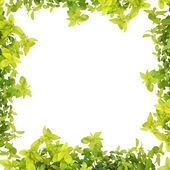 Herb Leaf Abstract Border — Stock Photo
