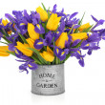 Iris and Tulip Flowers — Stock Photo