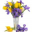 Stock Photo: Tulip and Iris Flowers