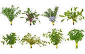 Herb Leaf Posy Selection — Stock Photo