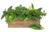 Herb Selection — Stock Photo