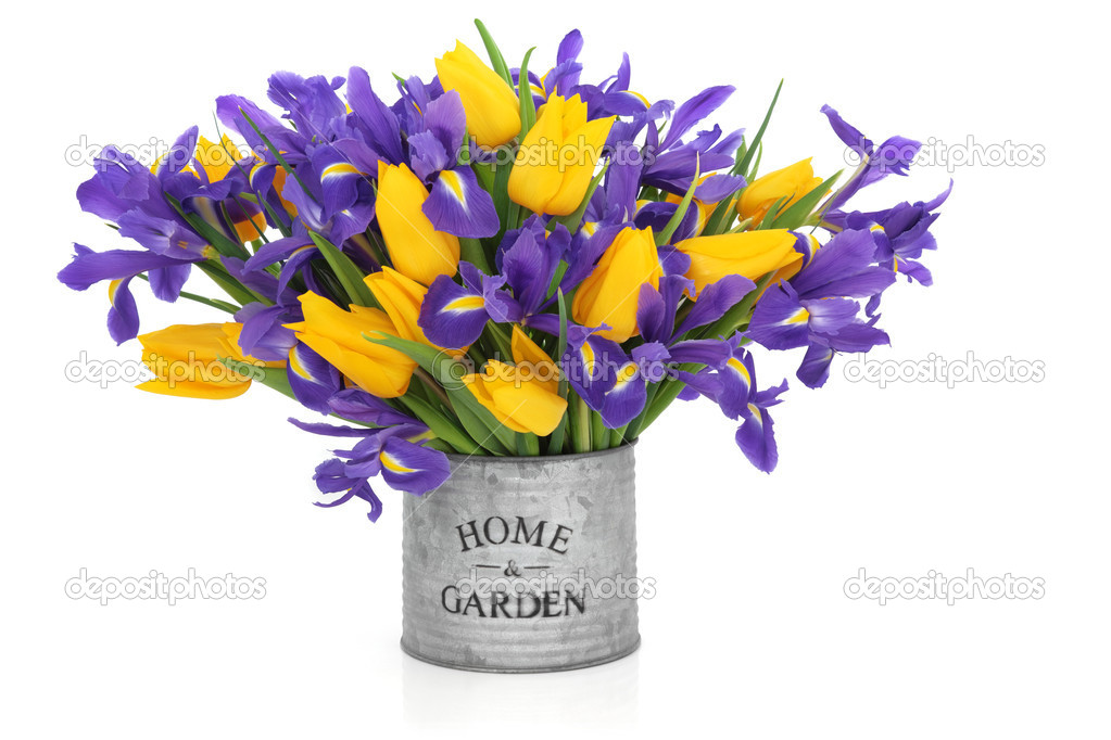 Iris and tulip flower arrangement in an old metal tin can with home and garden printed on the front isolated over white background.  Stock Photo #5150789