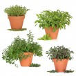 Herb Collection — Stock Photo #5167504