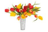 Tulpe blume schönheit — Stockfoto