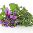 Stock Photo: Medicinal Flower and Herb Leaves