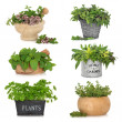 Herbs in Containers - Stock Photo