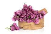 Clover Flower Blossom — Stock Photo