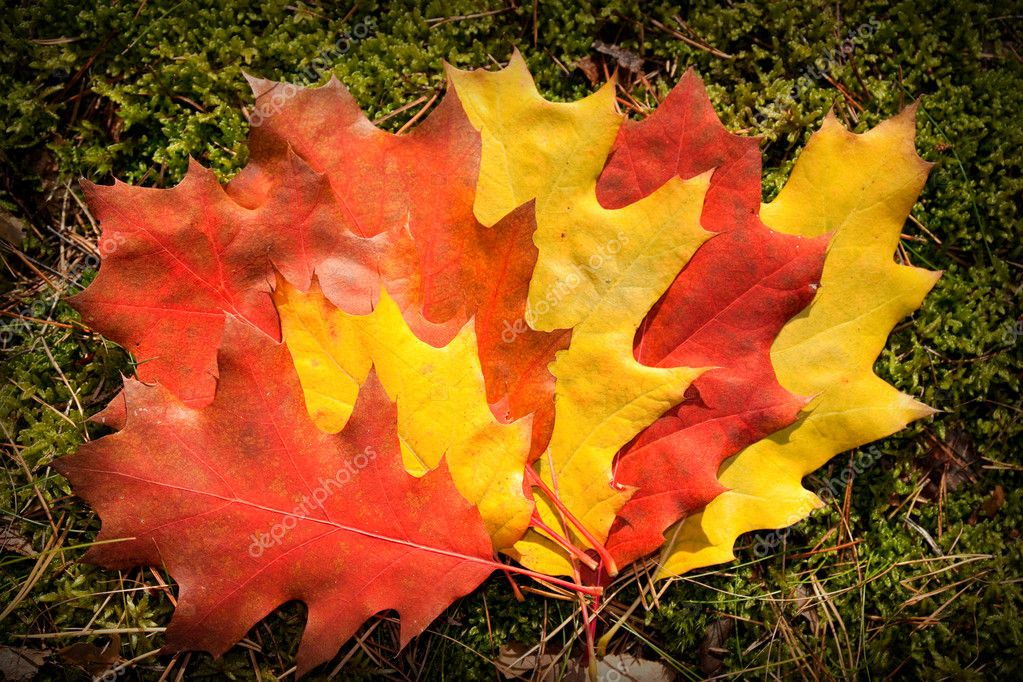 Autumn colorful leaves - fall background  Stock Photo #4130386