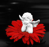 Angel and a flower — Stock Photo