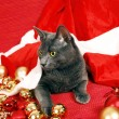 Christmas cat — Foto Stock #4398870