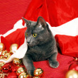 Stock Photo: Christmas cat