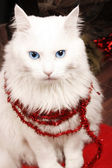 Christmas cat — Stockfoto