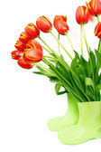 Fresh tulips in boots — Stock Photo