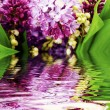 Lilac in the water - Stock Photo
