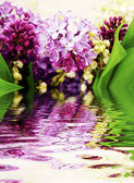 Lilac in the water — Stock Photo