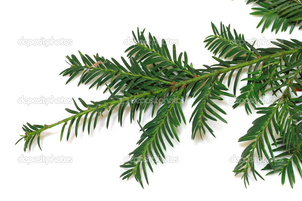 A christmas tree  — Stock Photo #3970311
