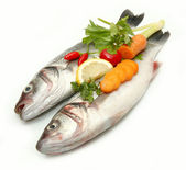 Sea bass — Stock Photo