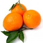 Orange — Stock Photo #4630315