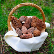 Stock Photo: Basket Of fresh Morel Mushrooms