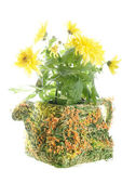 Flowerpot with flowers — Stock Photo
