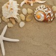 Shells and stones on sand — Stock Photo #4323155